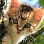 tiny-kitten.jpg
